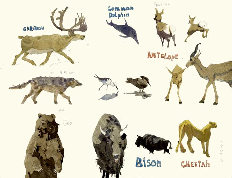 Sketches of Animals by Eddie Flotte