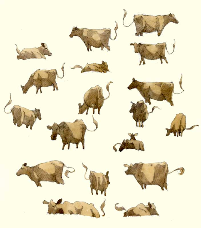 Sketches of Cows by Eddie Flotte