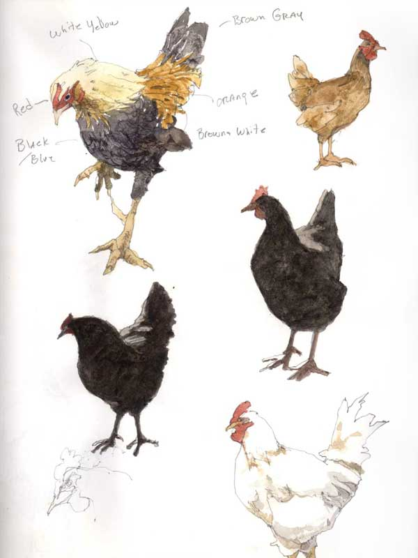Sketches of Hens and a Rooster by Eddie Flotte