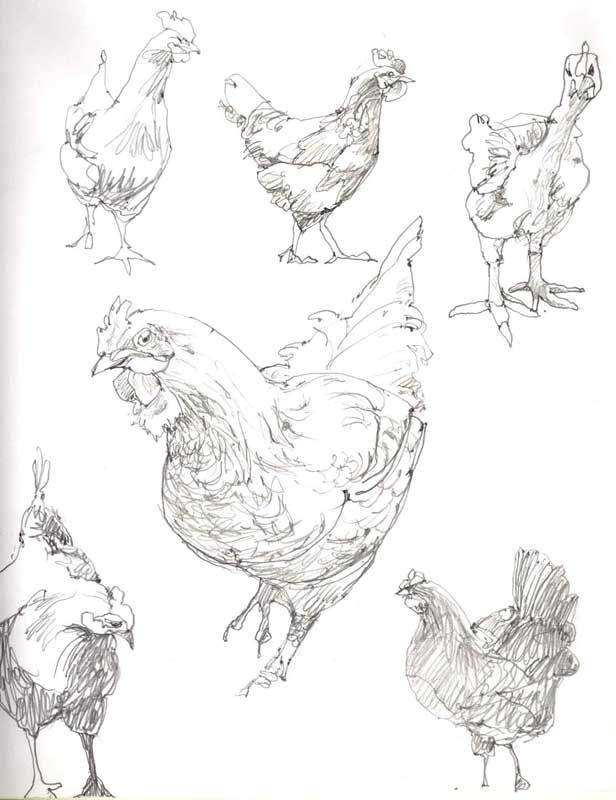 Sketches of Hens in Pencil by Eddie Flotte