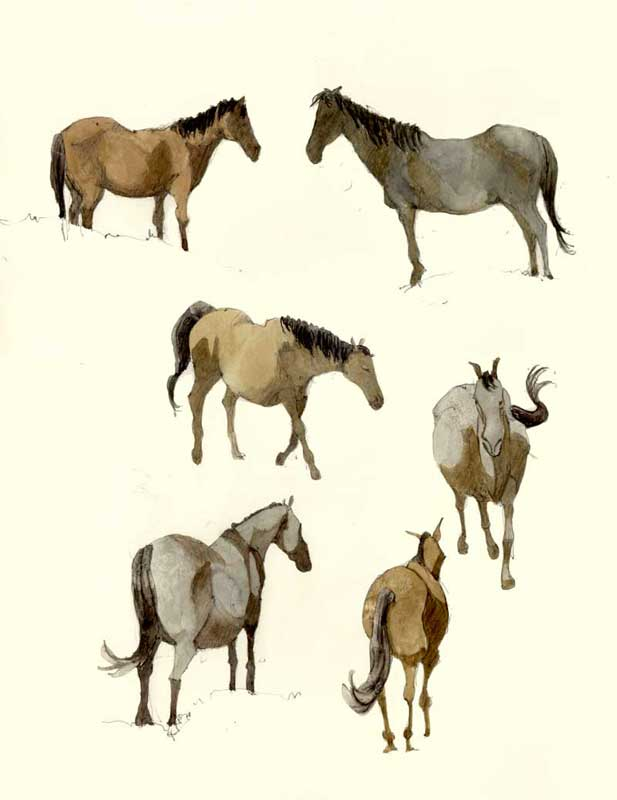 Sketches of Horses by Eddie Flotte
