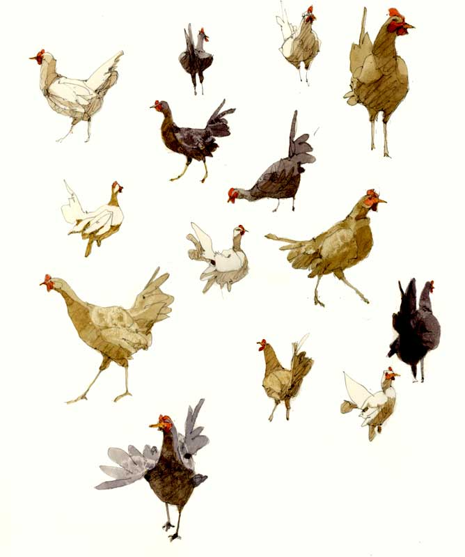 Sketches of Many Chickens by Eddie Flotte