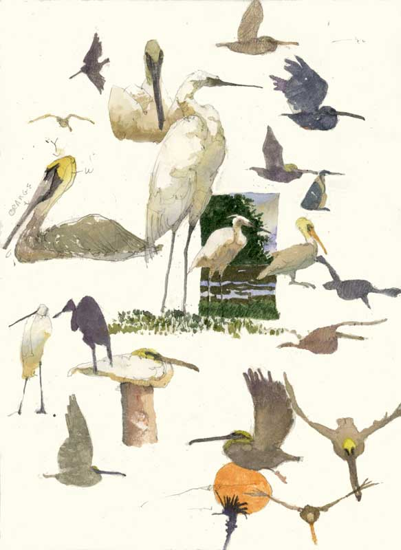 Sketches of Pelicans and Egrets by Eddie Flotte