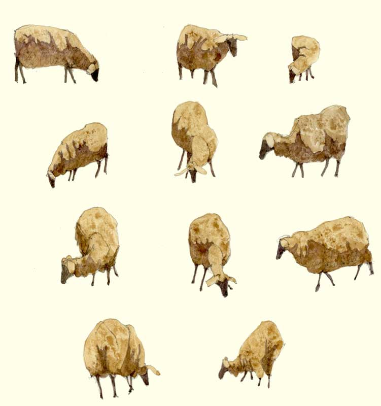 Sketches of Sheep by Eddie Flotte