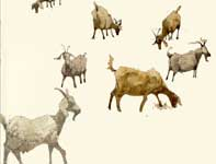 Painting by Eddie Flotte: Sketches of Billy Goats