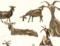 Painting by Eddie Flotte: Sketches of Goats