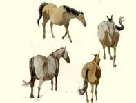 Painting by Eddie Flotte: Sketches of Horses